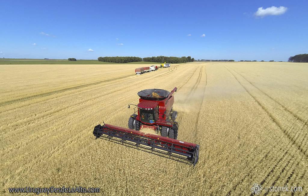 Foto aérea de una cosechadora en un trigal