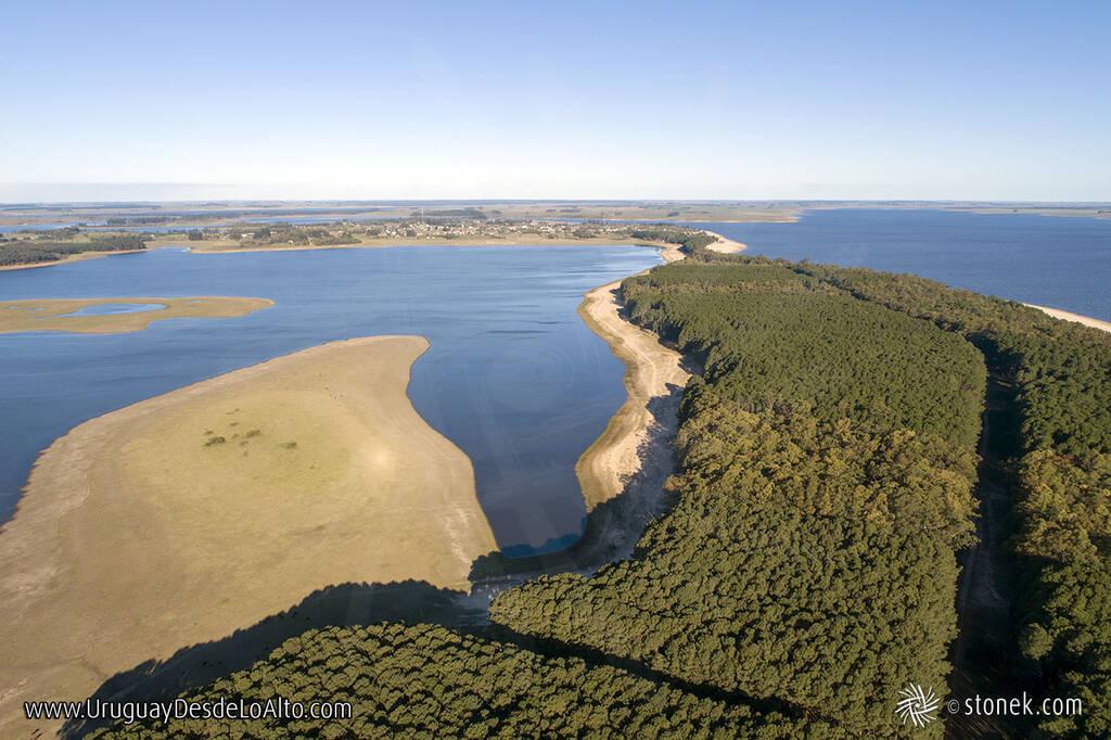 Vista aérea de los pinares de la península dorada